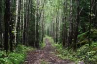 Polku Sappeen reitillä